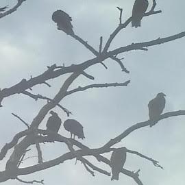 In my front yard attack of the vultures. Lol by Missy Catterson Urso - Nature Up Close Trees & Bushes (  )