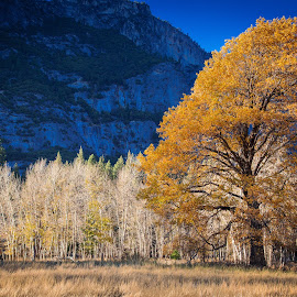 Fall on the Valley Floor by David Long - Landscapes Prairies, Meadows & Fields ( yosemite valley, yosemite, yosemite national park )