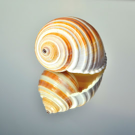 Twins by Patricia Warren - Nature Up Close Other Natural Objects ( shore, sea shell, nature, sea, ocean, beach, surf )