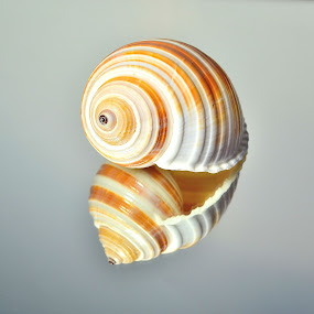 Twins by Patricia Warren - Nature Up Close Other Natural Objects ( shore, sea shell, nature, sea, ocean, beach, surf,  )