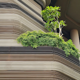 Green Plant by Koh Chip Whye - Buildings & Architecture Other Exteriors (  )