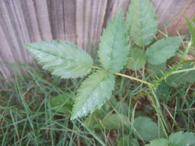 AlabamaPlants2-6.jpg