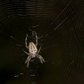 Pauk by Sead Kazija - Nature Up Close Webs
