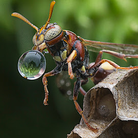 Bee & Water Bubble by Carrot Lim - Animals Insects & Spiders