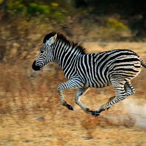 Smoking fast by Gorazd Golob - Animals Other Mammals