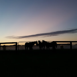 morning sunrise.  by Starry Acres - Animals Horses