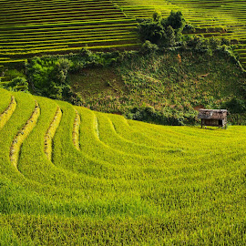 Padi Fields of North Vietnam by Joyce Chang - Landscapes Prairies, Meadows & Fields