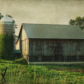 Ivy on the silo by Vivian Gordon - Buildings & Architecture Other Exteriors ( vigor, barn, ivy, silo, rural, country )