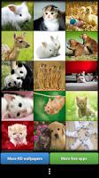 Screenshot of Cute Animals HD Wallpapers