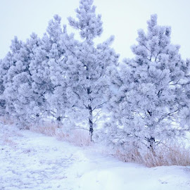Winter trees by Gerri Bradford - Landscapes Weather