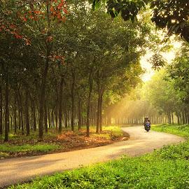 by Deden Mulyadi - Landscapes Forests