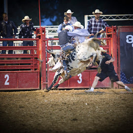 Hangin' On for 8 seconds by Michelle Blaydes Donovan - Sports & Fitness Rodeo/Bull Riding