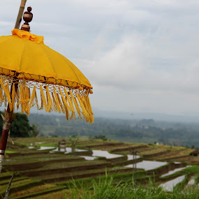 Culture of Ubud by Krisna Pillay - Landscapes Prairies, Meadows & Fields