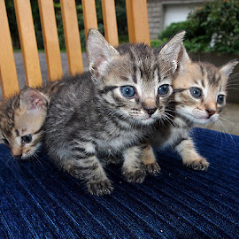 We share the same fate by Name of Rose - Animals - Cats Kittens ( cats, cat, baby, kittens, small )