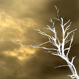 Dead tree. by Sam Wever - Digital Art Abstract