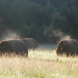 morning steam by Floranda Rene - Nature Up Close Leaves & Grasses