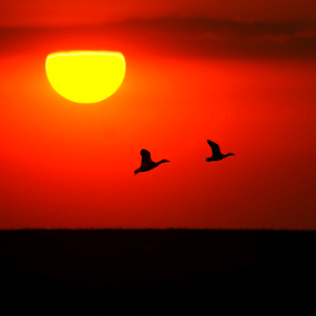March sunset by Doina Russu - Landscapes Sunsets & Sunrises ( wild, march, nature, landscape, birds, sun )