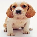 lindo perro Puzzle AA icon