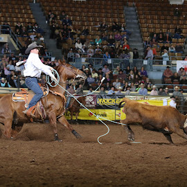 by Amanda Rutherford - Sports & Fitness Rodeo/Bull Riding