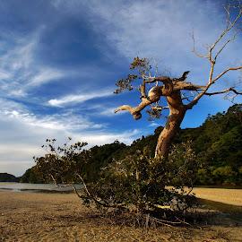 Old Mangrove by Dragan Keca - Landscapes Prairies, Meadows & Fields ( sand, estuary, mangroves, trees, river )