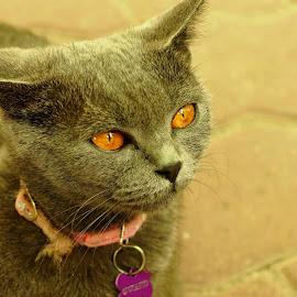 Nasuca by Cristian Raifura - Animals - Cats Kittens (  )