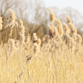 by Matthäus Rojek - Nature Up Close Leaves & Grasses ( smooth, nature, grass, nice, landscape, bokeh, close up )