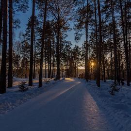 by Vadim Malinovskiy - Landscapes Forests