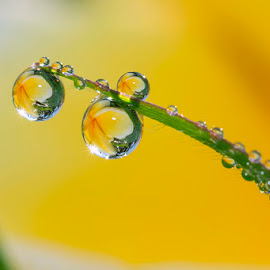 Beautiful morning by Citra Hernadi - Nature Up Close Natural Waterdrops