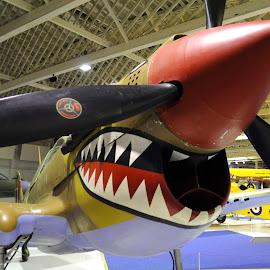 Shark of the Sahara by DJ Cockburn - Transportation Airplanes ( hendon, aeroplane, airplane, p-40, museum, curtis, london, warhawk, desert air force, aircraft, royal air force, historic hangar, raf, kittyhawk )