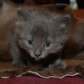 by Deanna Clark - Animals - Cats Kittens ( kitten )