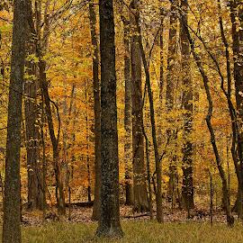 Blacklick Woods by Dan Ferrin - Landscapes Forests ( blacklick, nature, forest, landscape, woods )