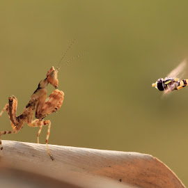 fight by Indra Wardana - Animals Insects & Spiders