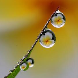 :: My dews :: by Dedy Haryanto - Nature Up Close Natural Waterdrops (  )