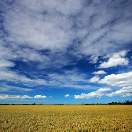 Canterbury Plains by Dragan Keca - Landscapes Prairies, Meadows & Fields ( clouds, sky, plains, new zealand, fields )