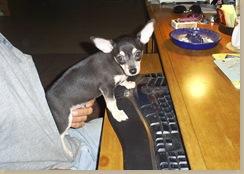 puppy blogger