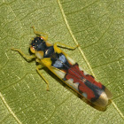 Sharpshooter Leafhopper