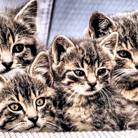 What's Up? by Barbara Olstad - Animals - Cats Kittens