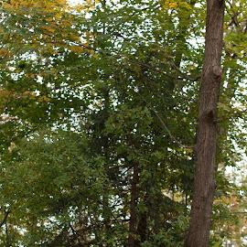Rest Stop by Jennifer Bacon - City,  Street & Park  City Parks ( park, tree, bench, fall, space, leaves )