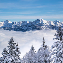 Above the Clouds by Martin Walser - Landscapes Cloud Formations ( clouds, mountains, winter, fog, snow, landscape, austria, mist )