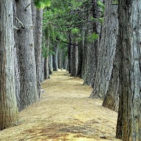 by Fran Juhasz-Mckitrick - Landscapes Forests (  )
