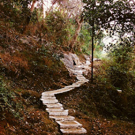 The lonely path by Prince Frankenstein - Instagram & Mobile Android ( assam, hills, jungle, staircase, india,  )