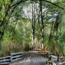 Journey by Ernie Kasper - Digital Art Places ( canadian artist, challenges, walking, life, overcome, art, artistic, path, trees, fences )