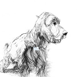 Olive by Brenda Bryson - Digital Art Animals ( ink drawing, english cocker spaniel, black and white, dog )
