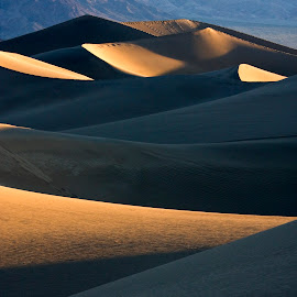 Sunrise shadow play on the dunes. by Gale Perry - Landscapes Deserts (  )