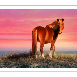 by Alice Gipson - Animals Horses ( horse.wild horse.alicegipsonphotographs )
