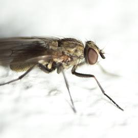 fly by Jean Bogdan Dumitru - Novices Only Macro