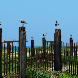 Seagull Perches by Cathy Hood - Animals Birds