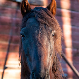 by Larry Rogers - Animals Horses