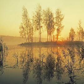Light by Zenonas Mockus - Landscapes Sunsets & Sunrises ( lake, morning, mist )