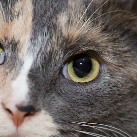 by Cathy Slow-Smith - Animals - Cats Portraits